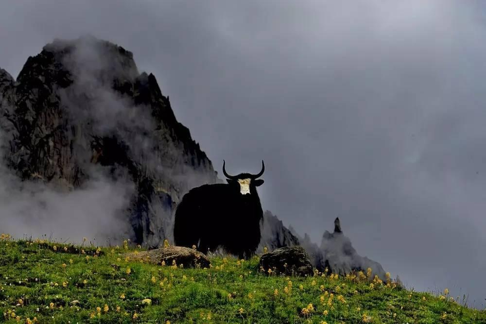 你知道关于巴塘羊皮胡琴的凄美爱情传说吗?